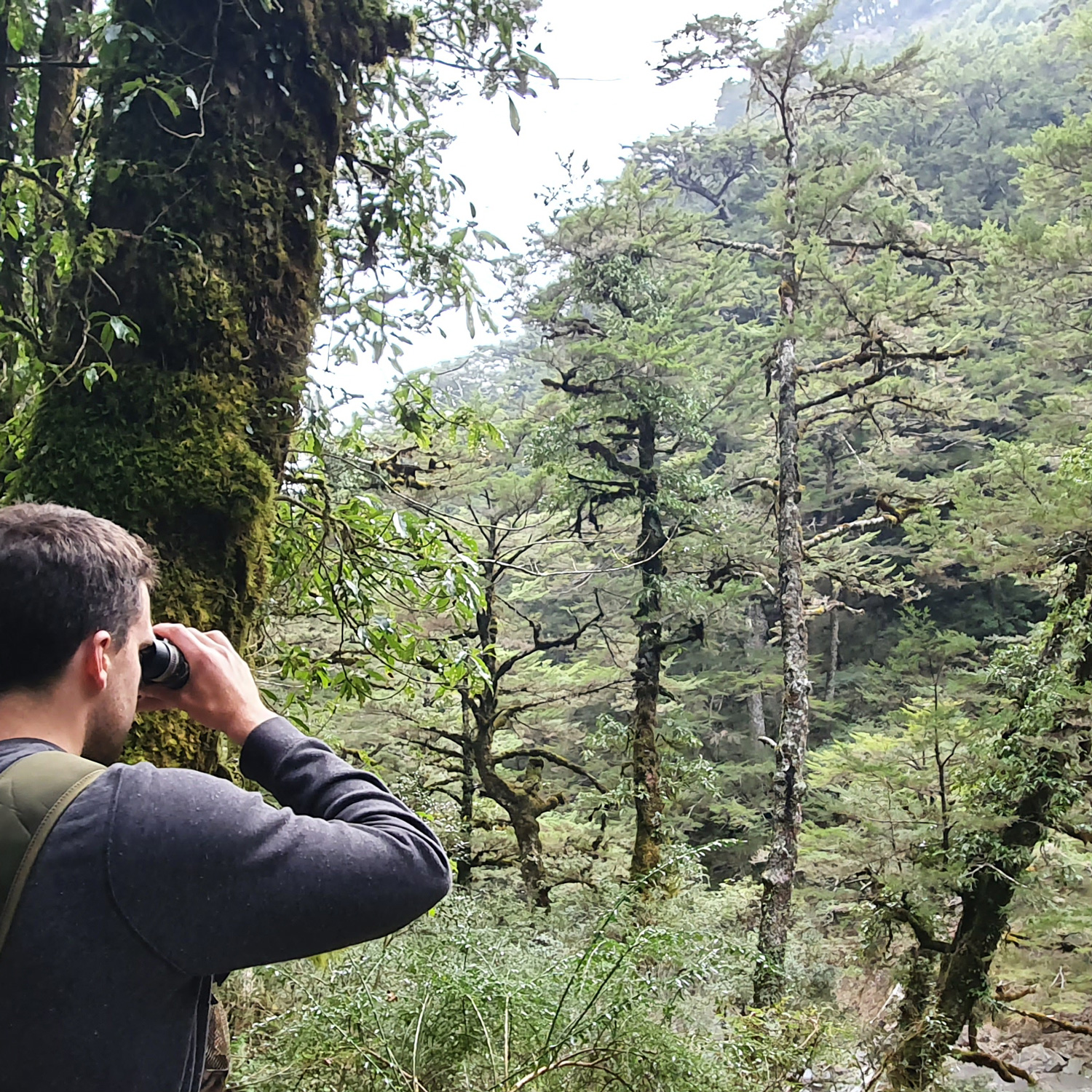 Observation in forest with Extra-low dispersion Binoculars